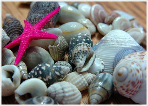 Ракушки - морская тематика в интерьере.  Возвращаясь с лазурных берегов...
