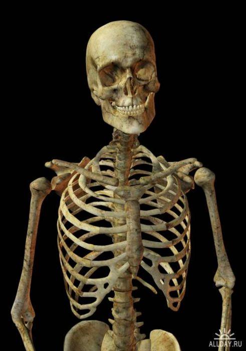 Потому что скелет обтянутый кожей - выглядит не очень эстетично.  Почему снимать майку, на пляжу или когда жарко...