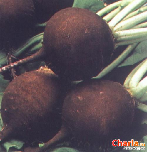 Черная редька от кашля рецепт